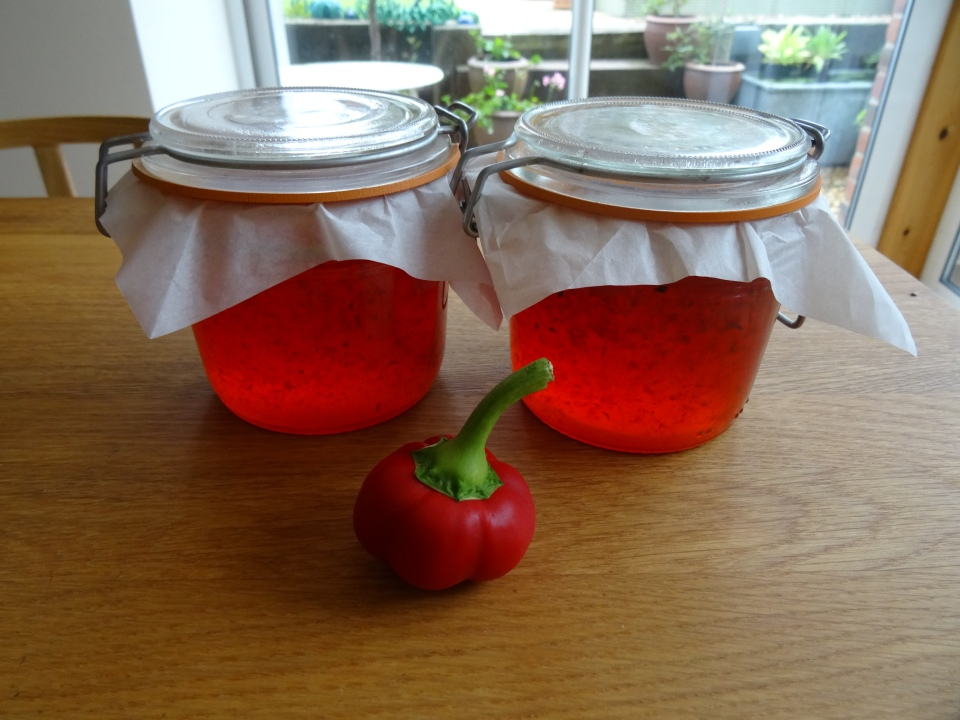 Hot (actually pleasantly warm) chilli jam. Last of the summer chilli crop. First of the autumn jams...